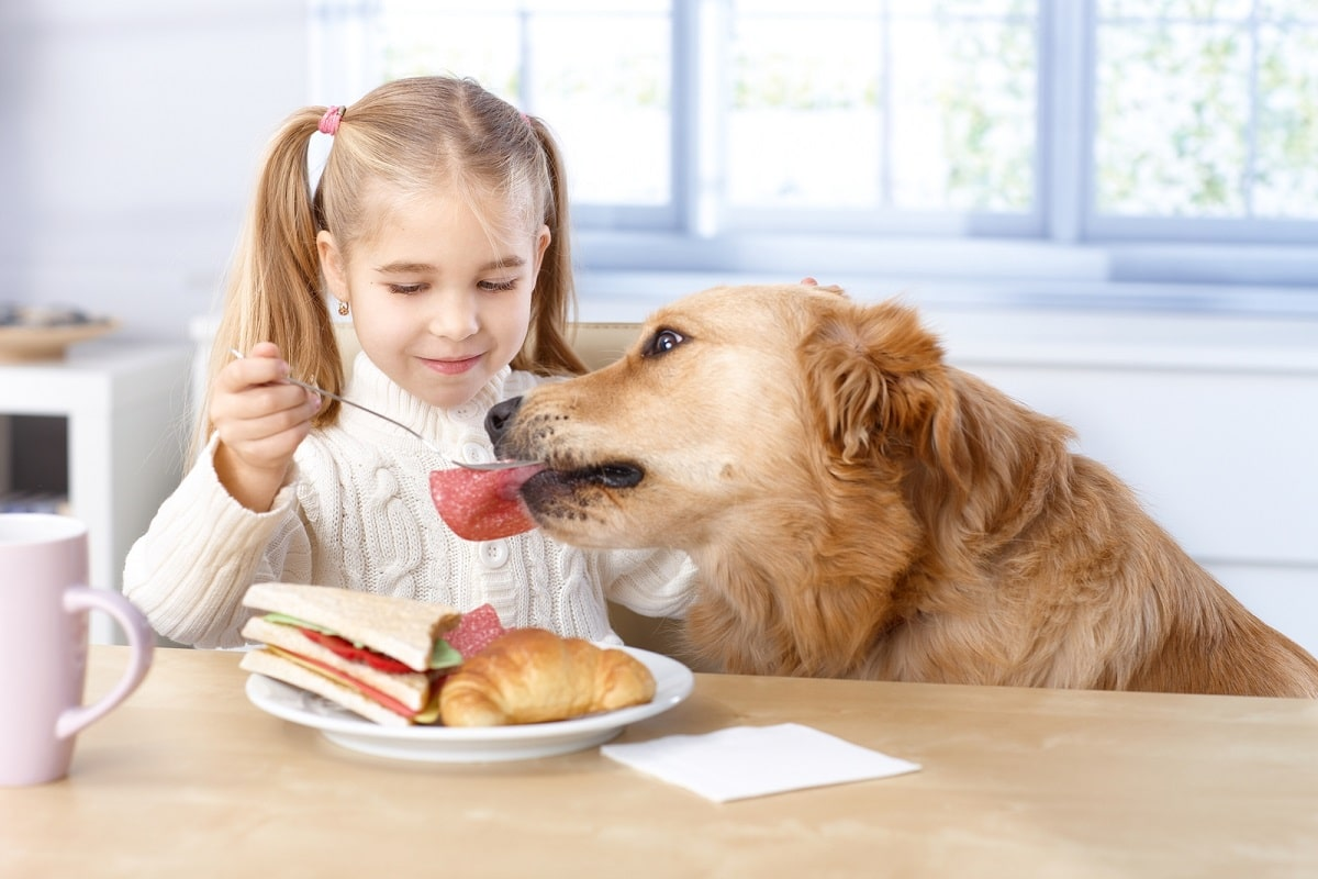 Alimento saludable para perros