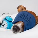 beneficios de dormir con tu perro