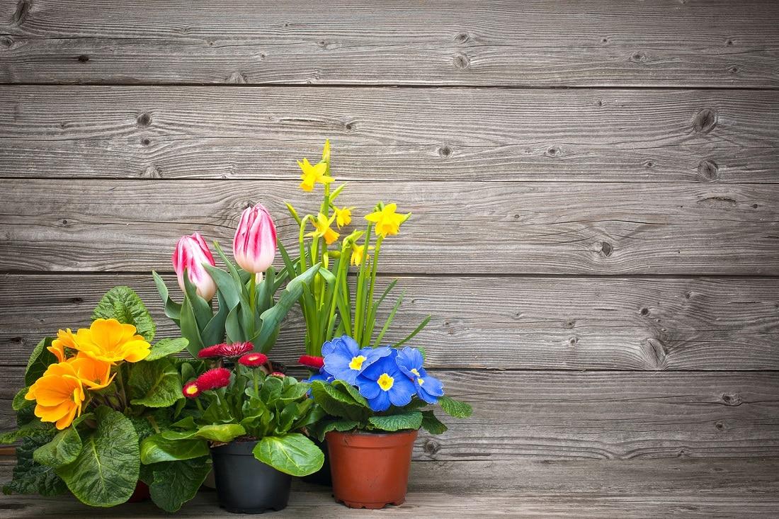 las plantas y el feng shui