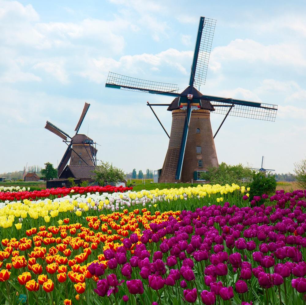 campos de tulipanes en holanda