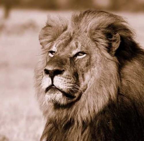 el dentista que asesinó al león Cecil