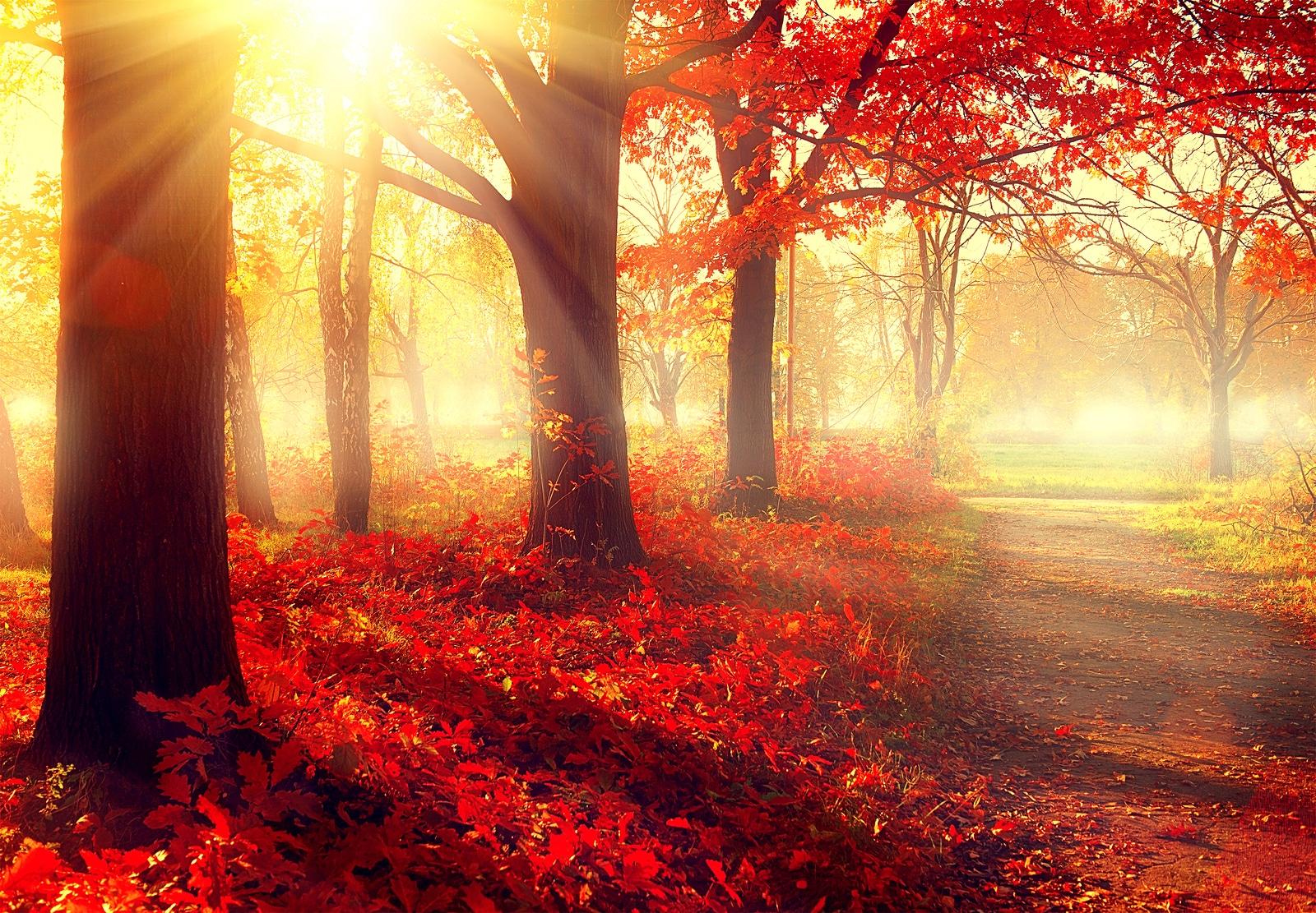 Tips para las vacaciones de otoño
