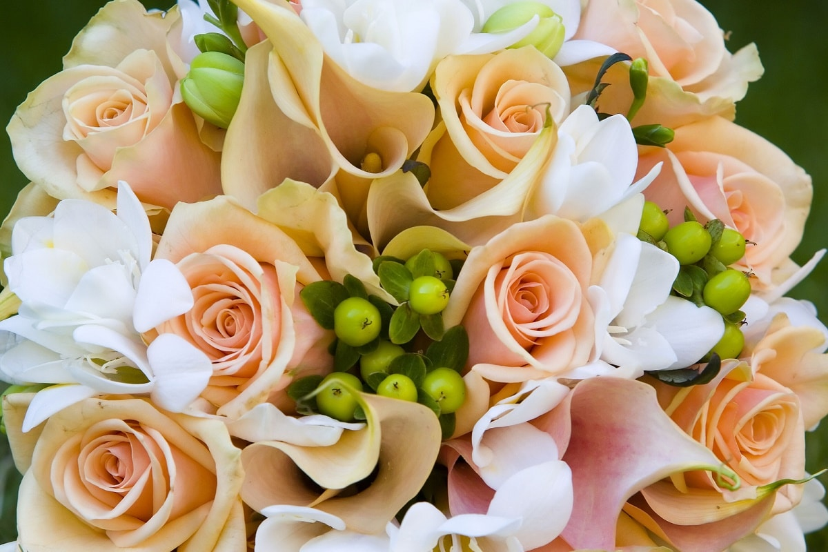 flores naturales que no se marchitan