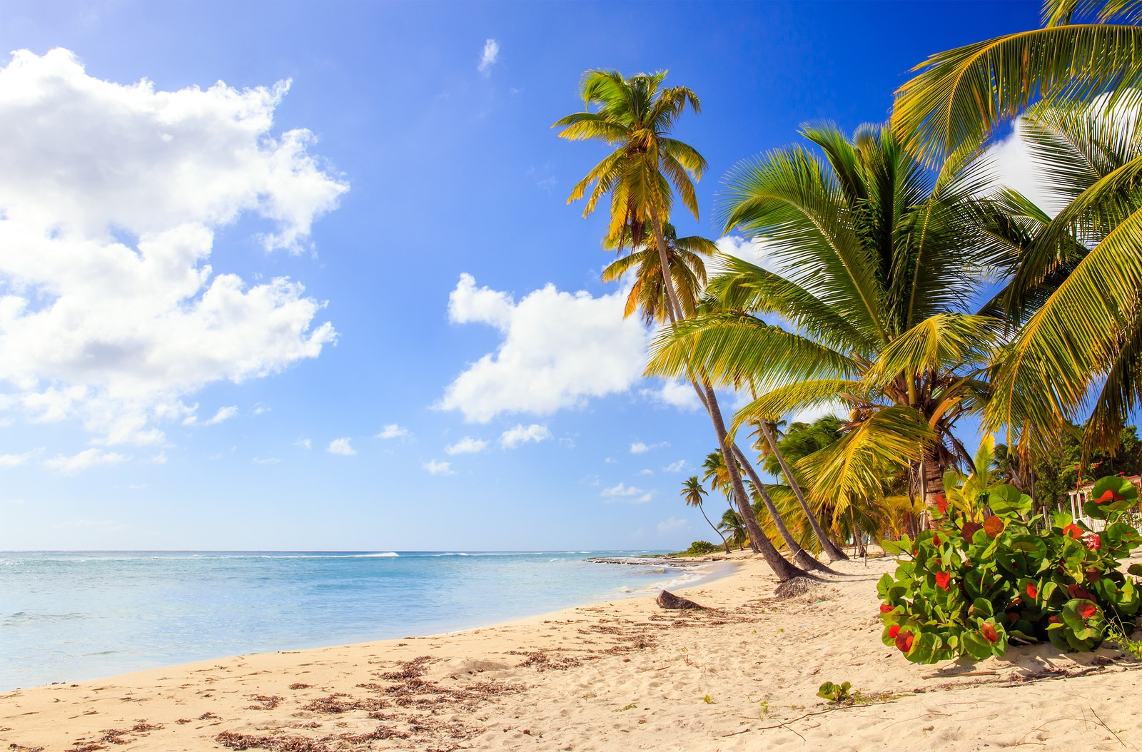Asegúrese de tener todo listo para su viaje a la República Dominicana