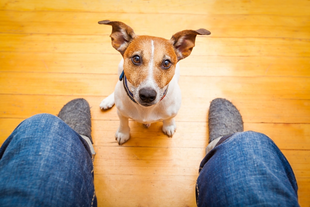 el nuevo traductor para perros