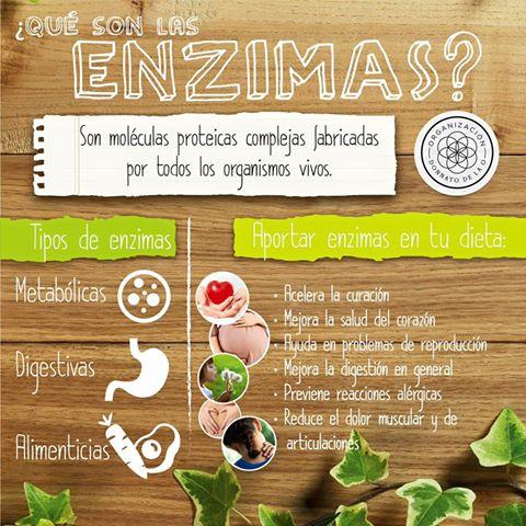 ¿Qué son las enzimas y cuál es su función en el cuerpo?