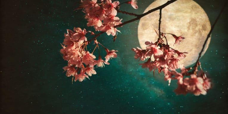 Abril 11: El día de hoy no olvides admirar la hermosa luna rosa
