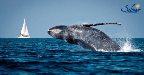 Grand Solmar Tiempo Compartido recomienda la observación de ballenas