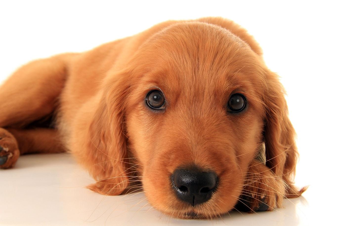 Las Mascotas Mejoran la Salud