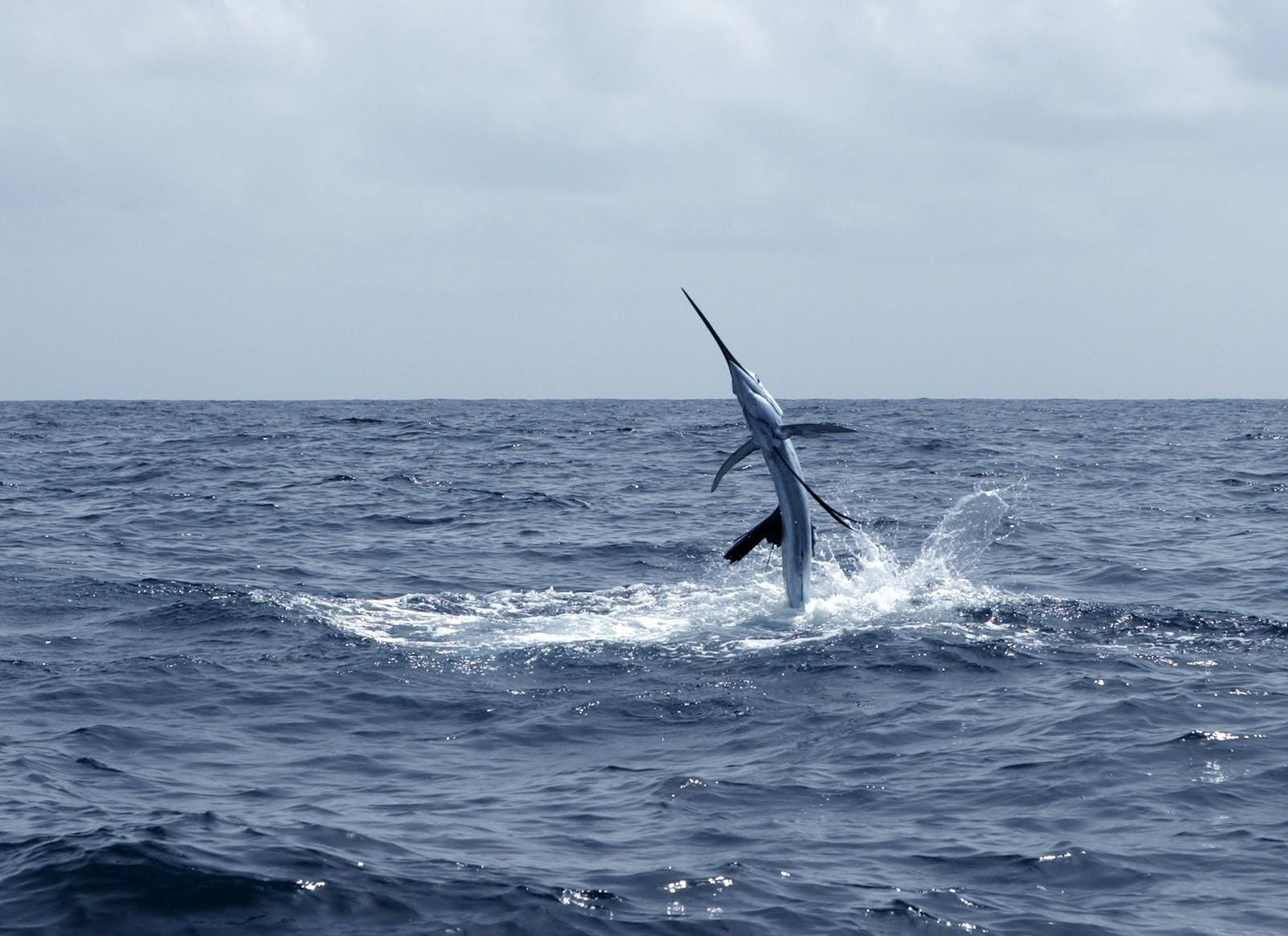 Pesca Deportiva en Cabo San Lucas