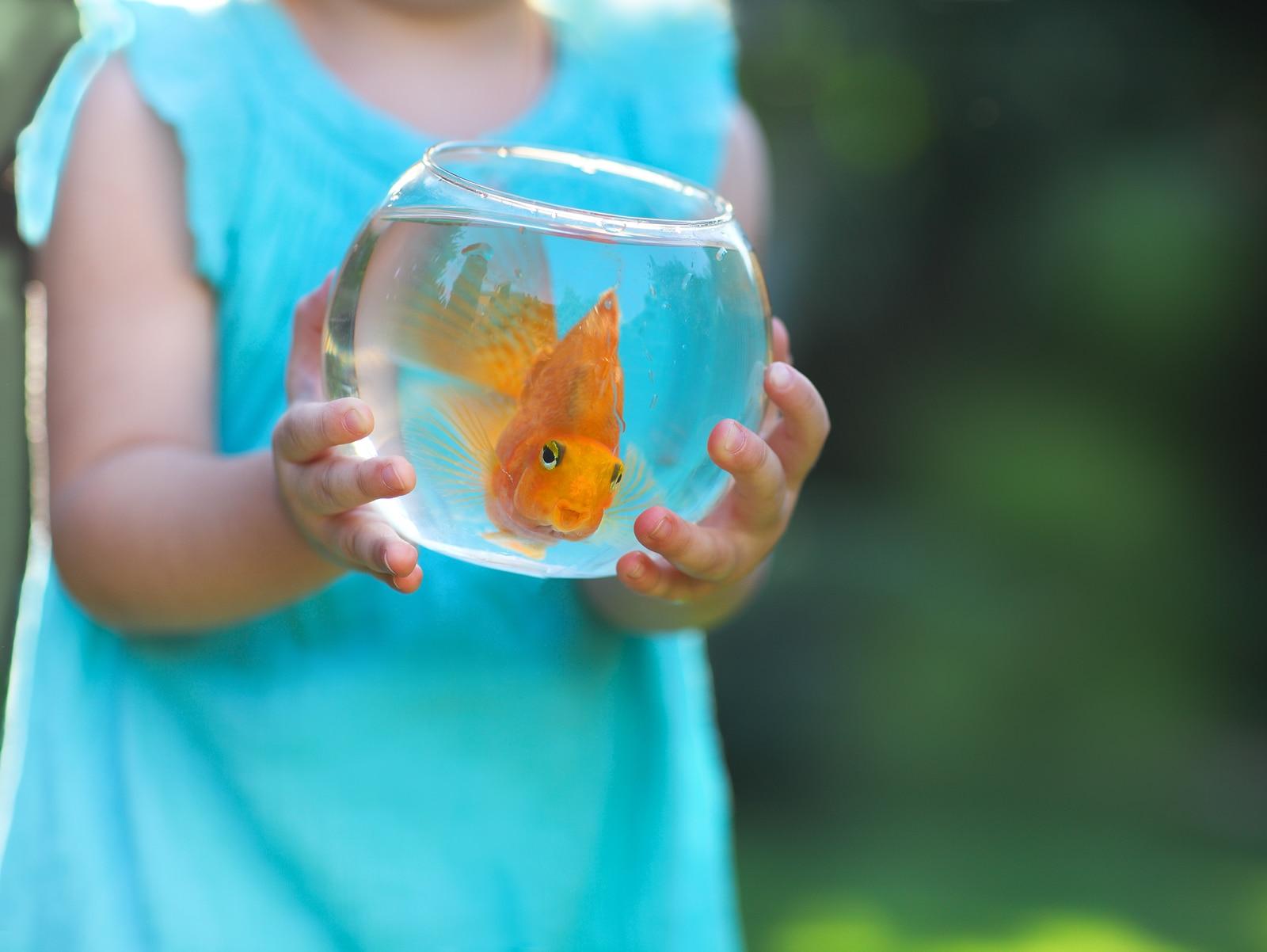 beso entre bebé y pez