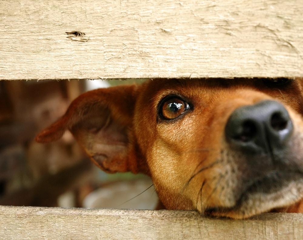 ladrones de perros en china