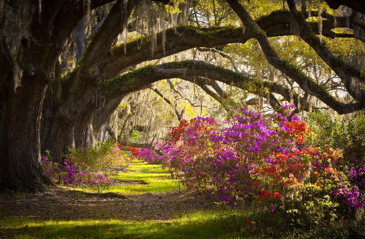 las mejores atracciones de Charleston