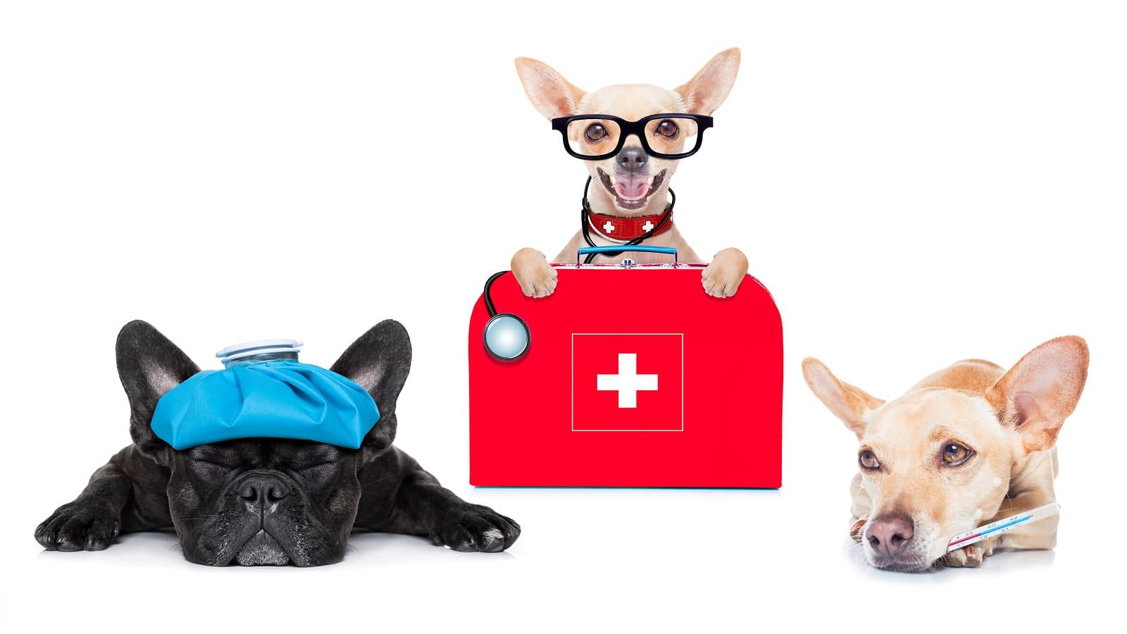 Cirugías plásticas para animales