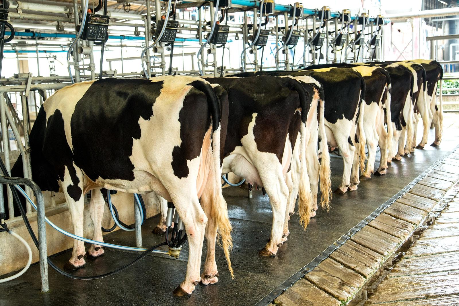 la industria láctea