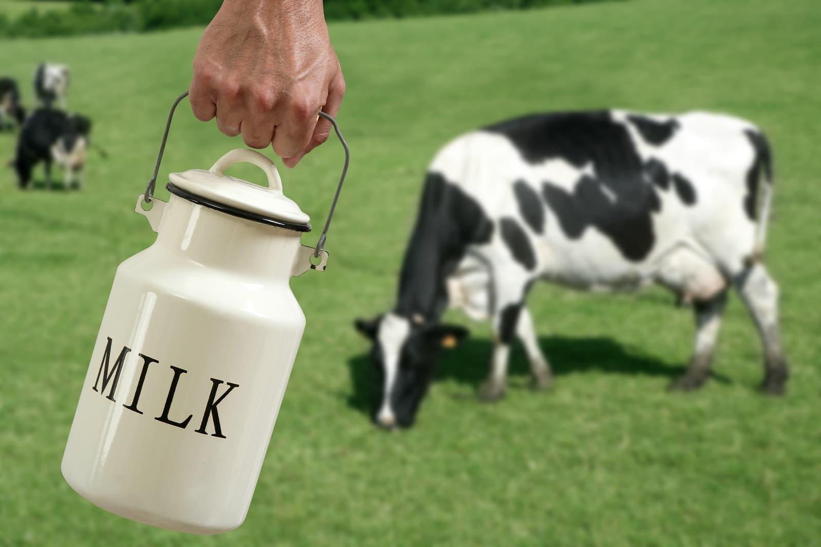 9 datos que tal vez no conoces sobre los lácteos [Parte 1]