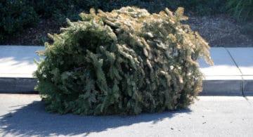 Mujer en Costco Devuelve Árbol de Navidad y le Reembolsan su Dinero