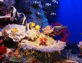 Las Mejores Razones para Visitar el Parque Nacional Cabo Pulmo, Arrecife Cabo Pulmo