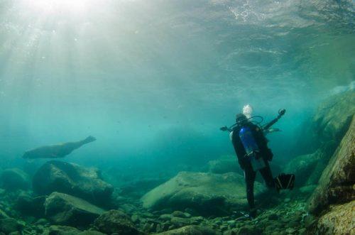 Las Mejores Razones para Visitar el Parque Nacional Cabo Pulmo, leones marinos