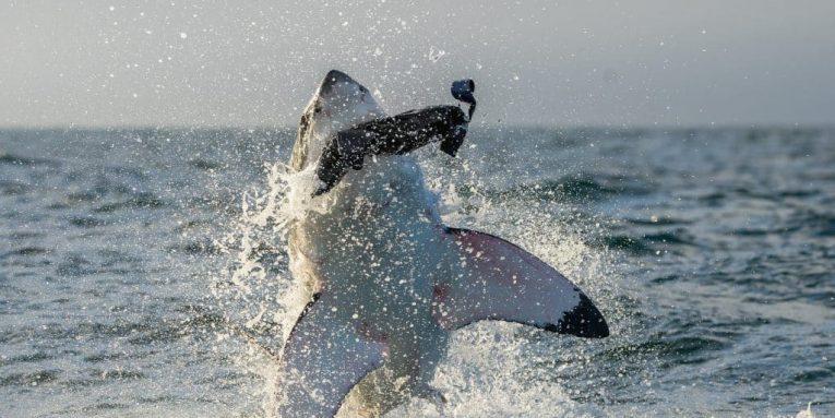 Como en la Película Se Reporta Ataque de Tiburón en Cabo Cod