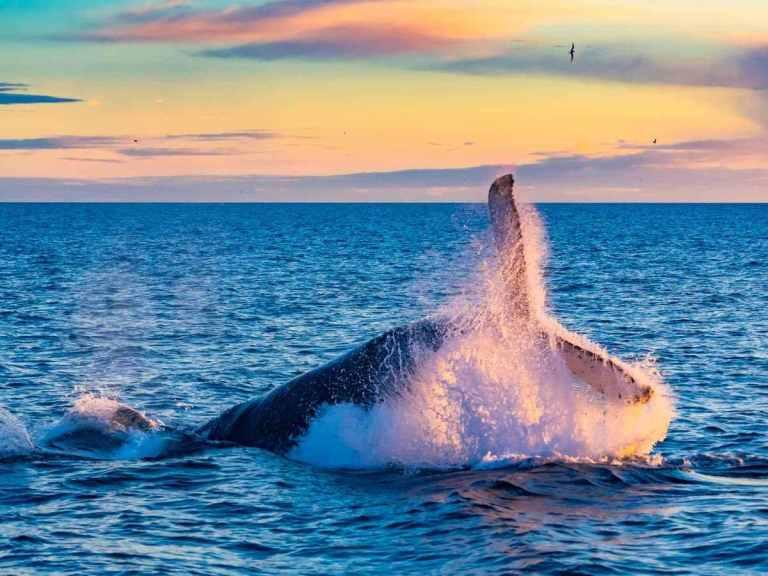 santuario de ballenas de el vizcaíno, patrimonio cultural de mexico, patrimonio de la unesco de norteamerica,