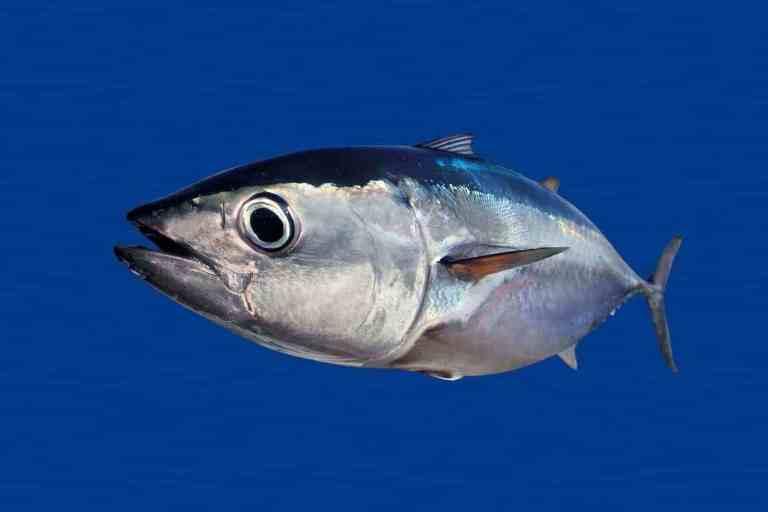 porque no comer atun, peligros de comer atun, efectos del mercurio en el cuerpo humano, intoxicacion por mercurio signos y sintomas