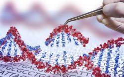 genoma humano desventajas, relacion entre el adn y el cancer, beneficios del genoma humano, riesgos de la manipulacion del genoma humano, desventajas de la manipulacion del genoma humano, aplicaciones del genoma humano, problemas del genoma humano, problemas eticos del genoma humano