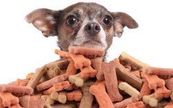 golosinas peligrosas para perros, golosinas para perros de que estan hechas, carnaza para perros ingredientes, que es la carnaza para perros, como hacer carnazas para perros, es malo el hueso de carnaza para los perros