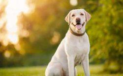 comida saludable para perros, cocina casera para perros, nutricion para perros, alimentación saludable para perros, comida casera para perros, alimentos recomendados para perros, alimentación correcta para perros