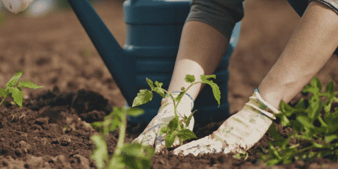 huerto en casa que plantar, como sembrar hortalizas en casa, como sembrar verduras en casa, consejos de jardineria, consejos de jardín, tips de jardinería casera,