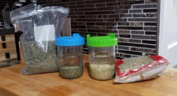 germinado de lenteja beneficios, germinados de lentejas valor nutricional, como conservar germinados de lentejas, como hacer germinados, como hacer germinados de lentejas, brotes y germinados, que son los germinados, cultivo de germinados