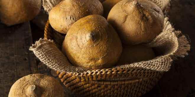 beneficios de la jicama, 10 beneficios de la jícama, para que sirve la jícama en el cuerpo, propiedades de la jícama, inulina propiedades, fibra inulina propiedades